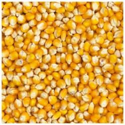Sachet maïs/huile de coco